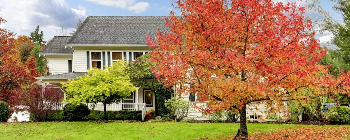 White horse farm American house during fall with green grass