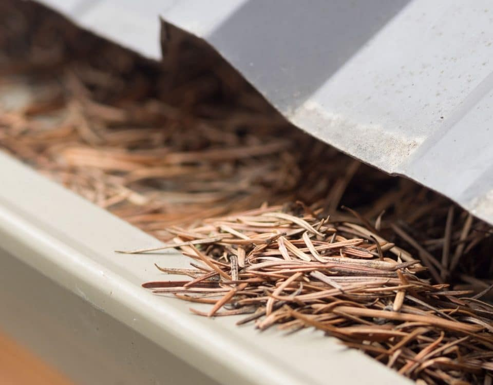 Gutter clogged with pine needles