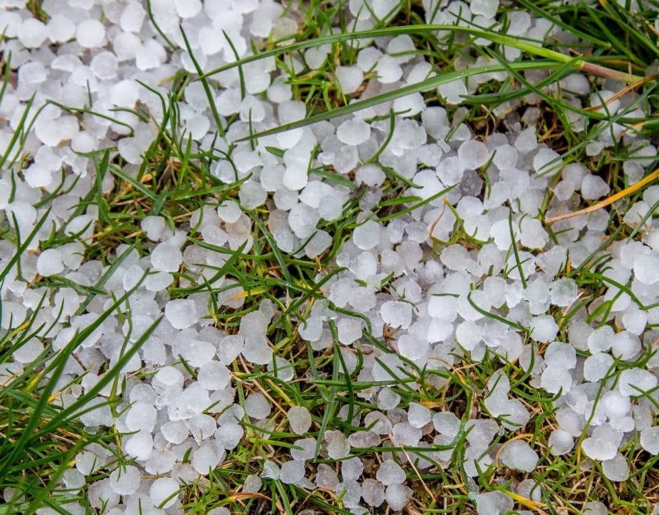Hailstones on grass