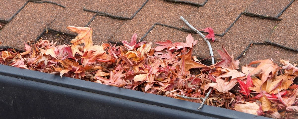 Rain gutter clogged with leaves