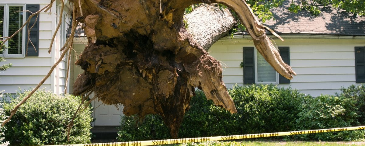 Uprooted tree on a home after a storm